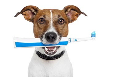 Dog With Electric Toothbrush 33478472