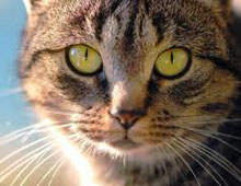 Cat Vaccinations | Animal Health Centre, Lower Hutt's
